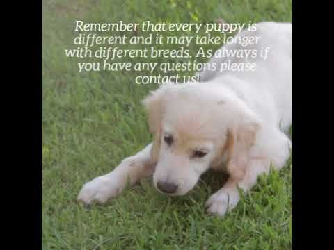 All Pets Club Wallingford Puppy Care With Images Puppy Care