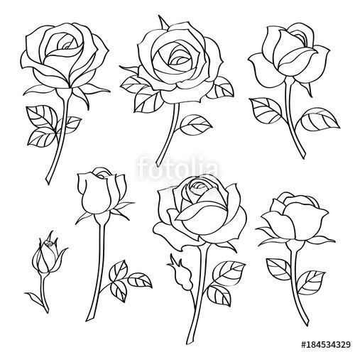 Vector Vector Set Of Decorative Vintage Roses Rose Drawing Simple Roses Drawing Flower Drawing