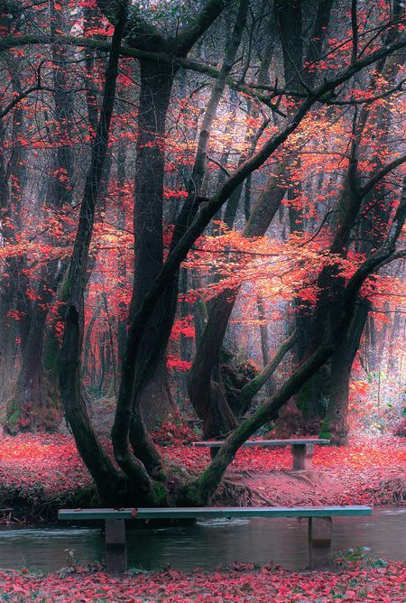 Forest Autumn Nature Photo By Mevludin Sejmenovic National Geographic Your Shot Autumn Forest Cool Landscapes Beautiful Forest