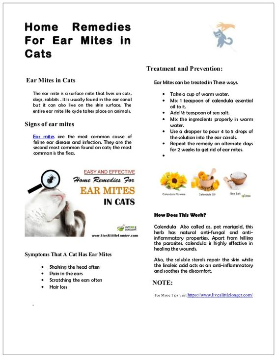 Home Remedies For Ear Mites In Cats Ear Mites In Cats The Ear Mite Is A Surface Mite That Lives On Cats Dogs Rabbits Cat Ear Mites Cat Remedies Dog Remedies