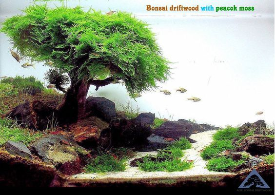 Bonsai Driftwood Tree For Aquarium Moss Fish Shrimp Planted Tank