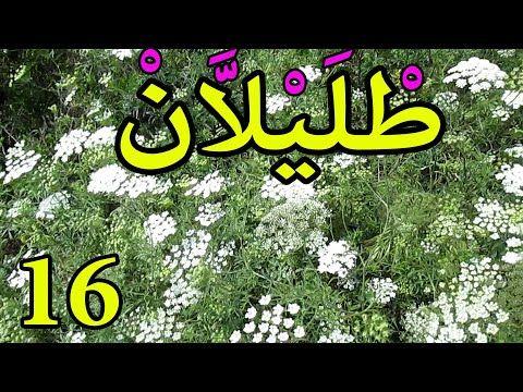 العشبة 16 من السلسلة التعريـفـية بالأعشاب الموجودة في المغرب آطريلال Youtube Calm Artwork Artwork Keep Calm Artwork