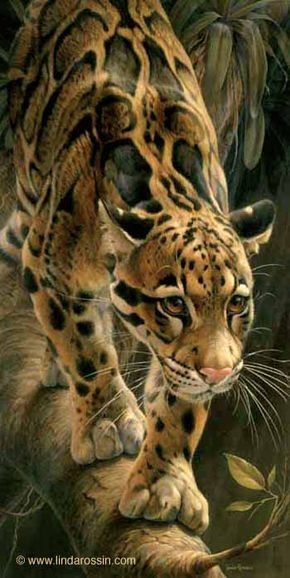 Art - Wildlife painting of a Clouded Leopard - title Out on a Limb - by Wildlife artist Linda Rossin