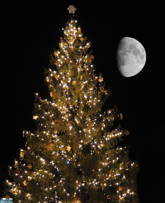 Merry Christmas: Amazing Pictures, Christmas New Years Winter, Happy New Year Photo, Happy Christmas, New Year Photos, Merry Christmas To All, Moonstruck Art