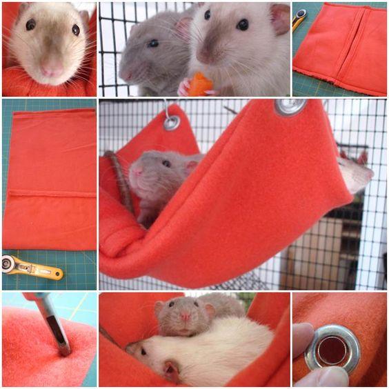 Hamsters, Hammocks and Rats on Pinterest