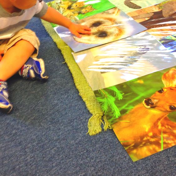 Toddler Montessori - language- large baby animal cards . Not a great pic but a fabulous lesson . Kids now talking about fawn and owlets :)