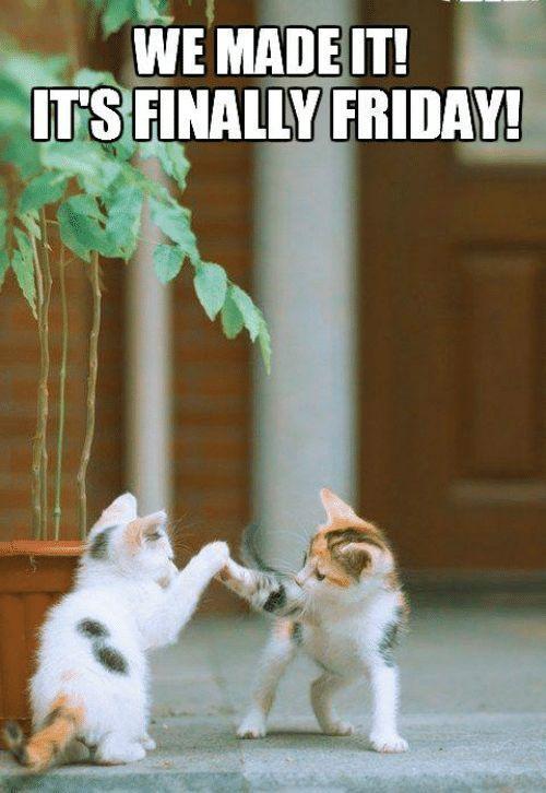 Good Friday Morning Meme : friday, morning, Funniest, Friday, Memes, Weekend, Funny, Memes,, Quotes, Funny,, Morning