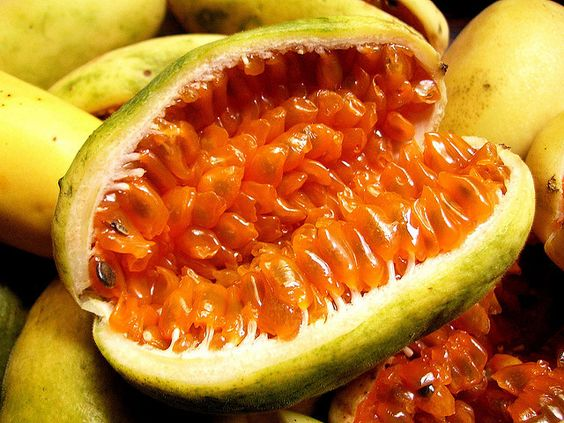 The passion fruit family: The curuba. | Colombian Fruits ...
