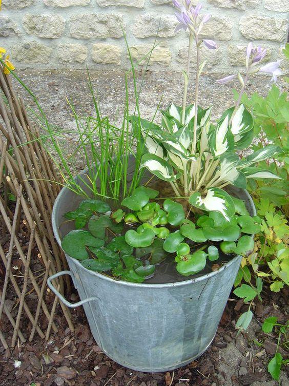 Lessiveuse en zinc transform e en petit bassin d 39 eau bassin de jardin et plantes aquatiques - Plantes aquatiques pour petit bassin ...