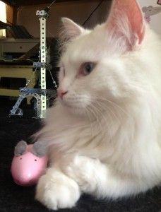 Venez voter pour La Souris Grise au concours #mystartupinparis ! Le chat l'a fait, lui :)