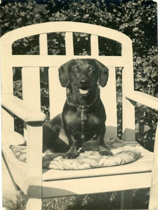 "Vintage Photo ""Chair Stealer"" Puppy Dog Snapshot Photo Antique Photo Black & White Photograph Found Photo Paper Ephemera Vernacular - 192 by DandRPhotos on Etsy https://www.etsy.com/listing/236661528/vintage-photo-chair-stealer-puppy-dog"