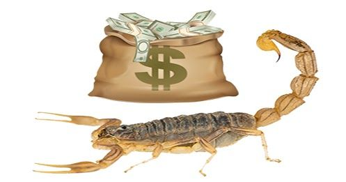 سم العقرب اغلى سائل في العالم تكلفته 39 مليون دولار للغالون يعتبر سم العقرب الخطير من بين اغلى السوائل في العالم حيث تقدر تكلفة ا Scorpion Animals Venom