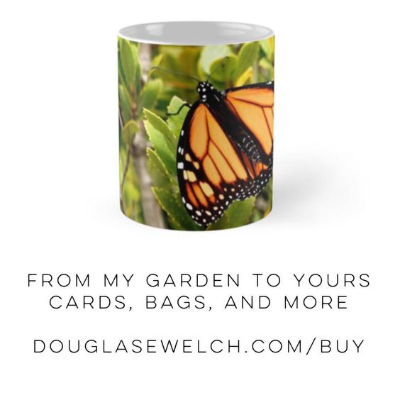 """Get this """"Butterfly in the Garden"""" mug and more at http://DouglasEWelch.com/buy - also on tote bags, cards, smartphone covers and more! #nature #naturelovers #outdoors #butterfly #insect #orange #products"""