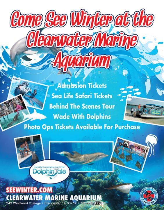 Clearwater Marine Aquarium Home Of Winter The Dolphin