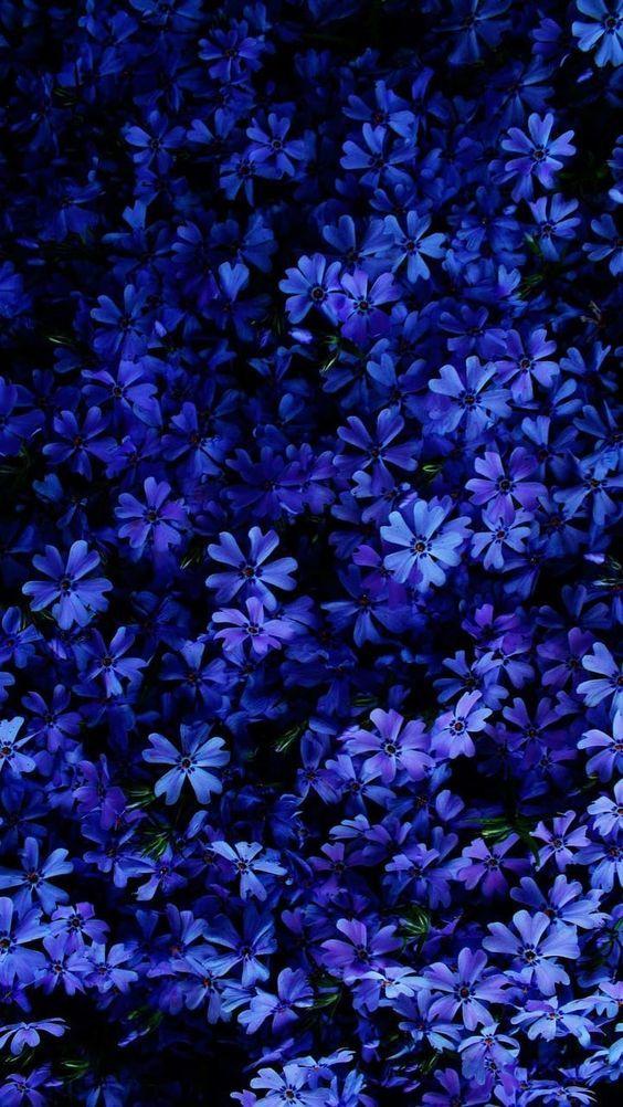 Los Mejores 52 Fondos De Pantalla Color Azul Oscuro Hacer Fondos De Pantalla Fondos De Pantalla Naturaleza Fondos De Pantalla De Color Azul