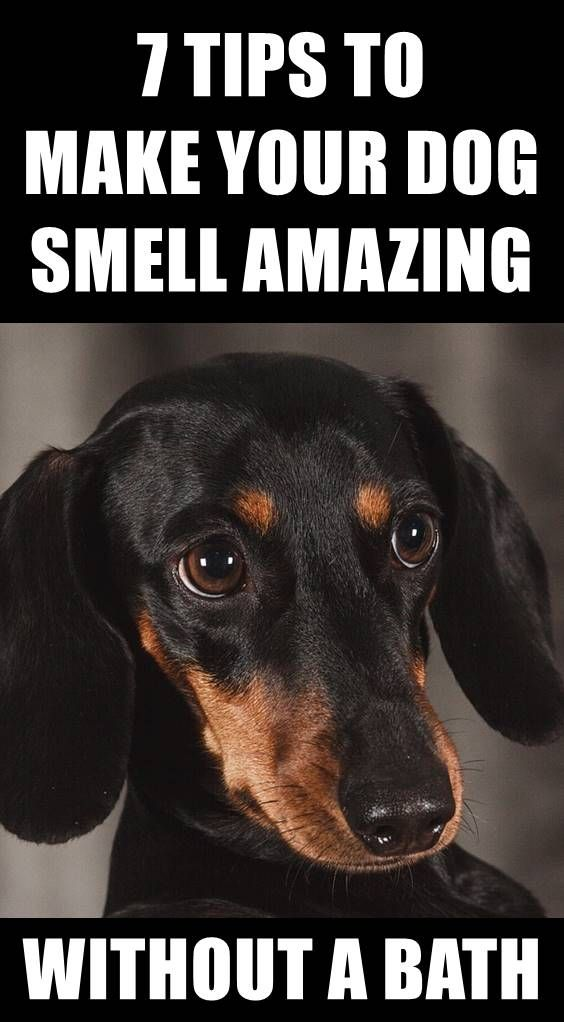 Does Your Dog Stink Do You Want To Get Rid Of Dog Smell It S