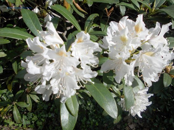 Flowers in Beelitz, Germany