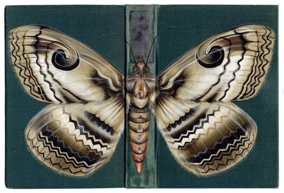 bugs painted on book covers by Bristol-based artist Rose Sanderson.