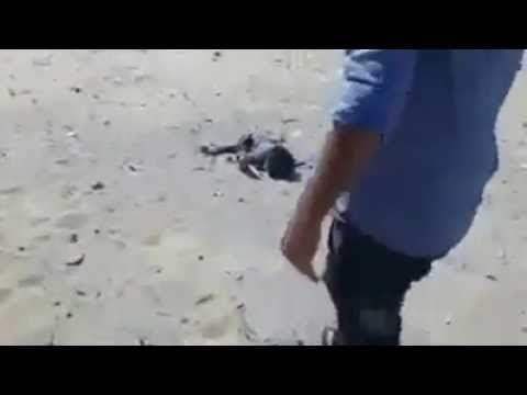 (WARNING GRAPHIC) Israel bombs beach killing four innocent children