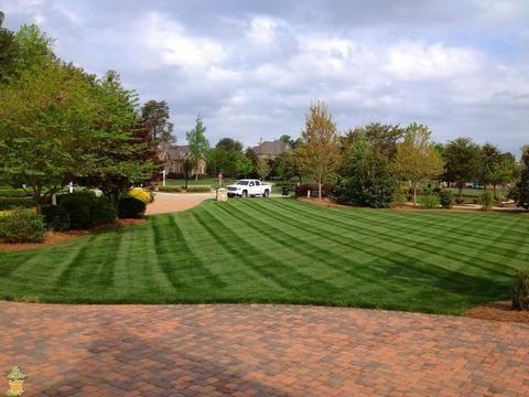Lesco Transition Blend Grass Seed In 2020 Best Grass Seed Grass Seed Backyard Vegetable Gardens