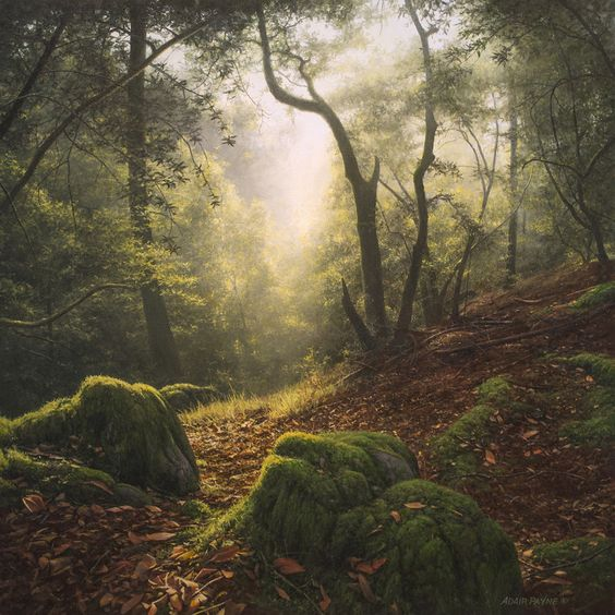 ALONE IN THE LAURELS, 28×28 (available at Sugarman-Peterson Gallery, Santa Fe)