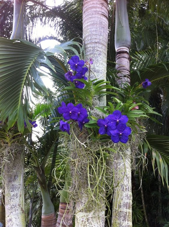 Free Beautiful Garden Wallpapers: Orchids At RF Orchids Great Place To Visit, Free Tour Of