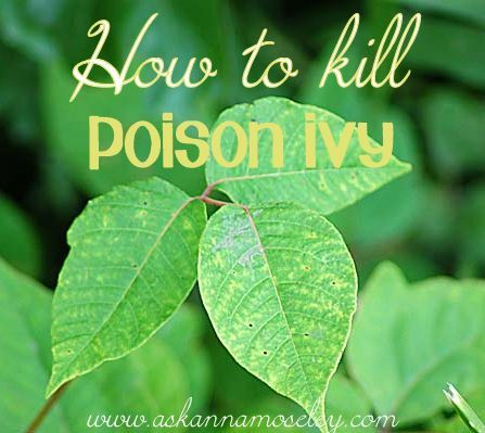 How to kill poison ivy (and many other stubborn plants)