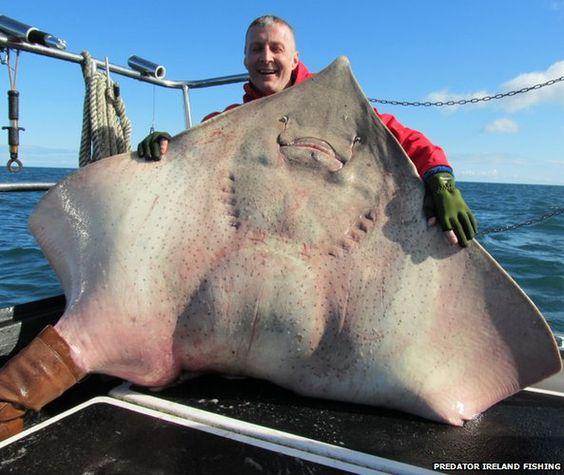 Sharks Big Shark And The O Jays On Pinterest