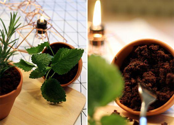 Fees Pflanzen-Deko und warum ich jetzt Erde esse / Mo'Beads / Monika Thiede