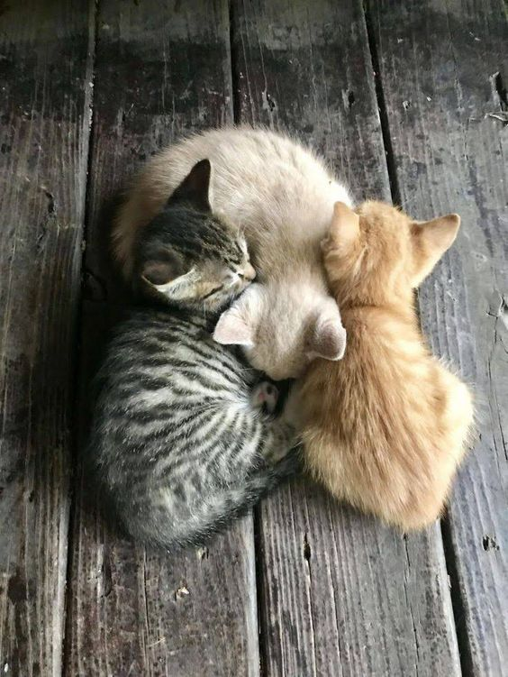 Kittens Versus Adult Cats How To Choose Which Is Right For You