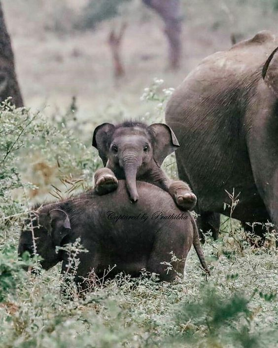 Cuteness Overload, Yala National Park тури на Шрі-Ланку