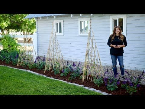 104 Growing Vines Up Teepee Trellises Garden Answer