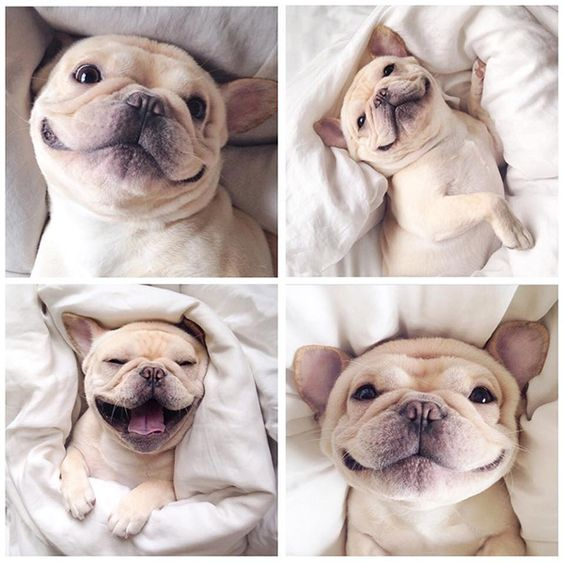 15 Pictures That Sum Up What It's Like To Own A French Bulldog inning buibub ugh ub ugh ugly Hvjv yvvy