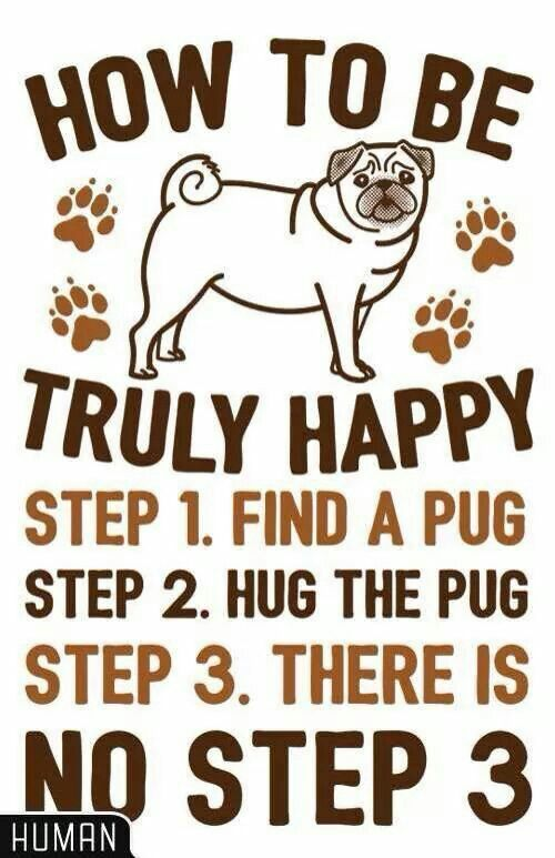 How To Be Truly Happy Pug Hugs Poster Lookhuman Pugs Pug