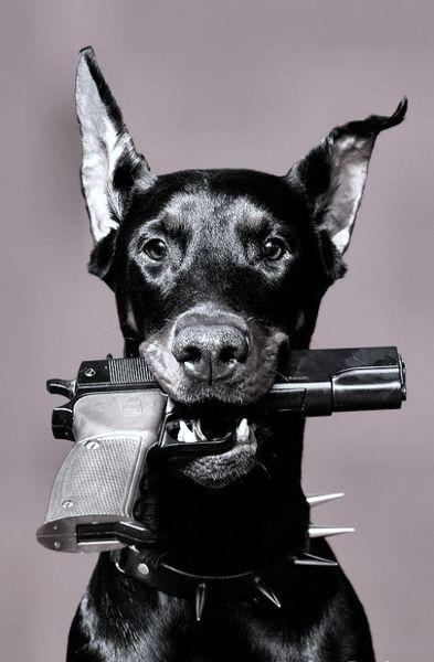 銃をくわえたおしゃれでかっこいい犬の壁紙