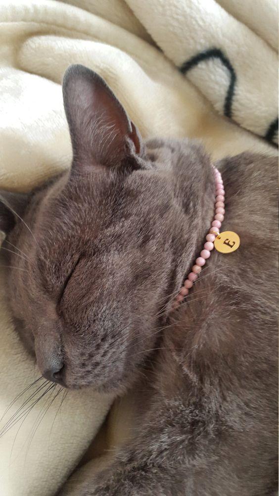 tabby cat chrome