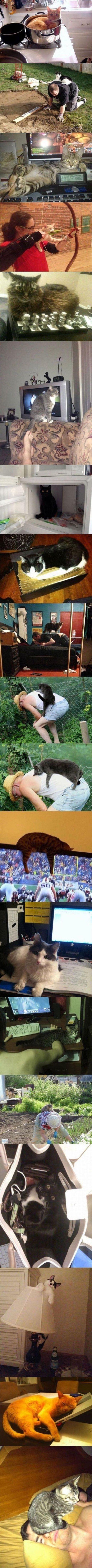 Katzen Logik