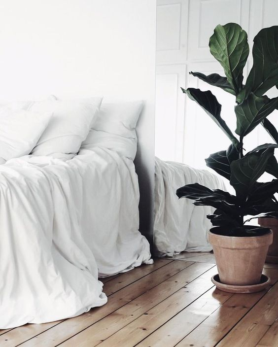 all white bedding, hard wood floors, white walls, indoor plant | minimal bedroom