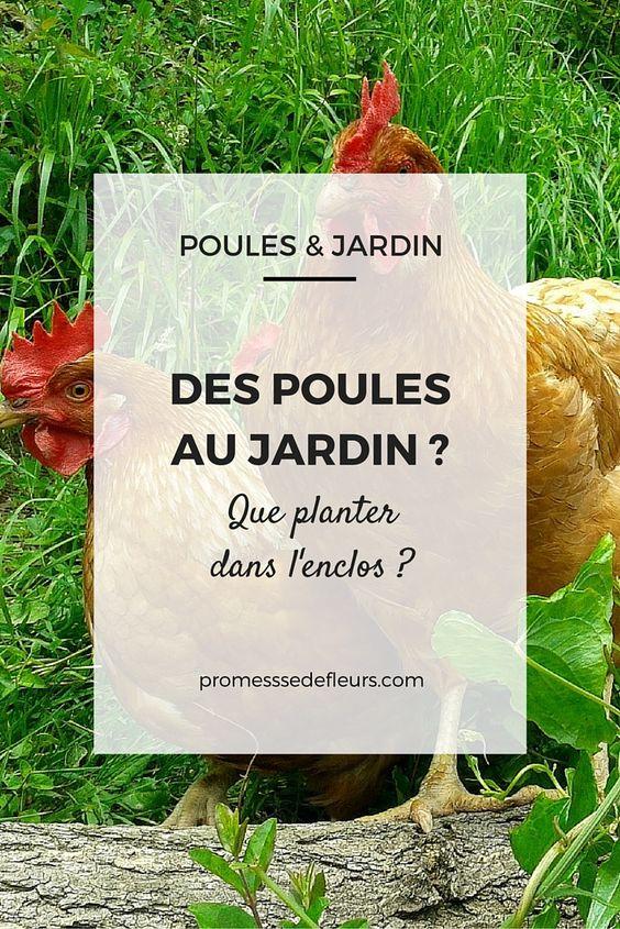 Des poules au jardin que planter dans l 39 enclos for Jardin que planter