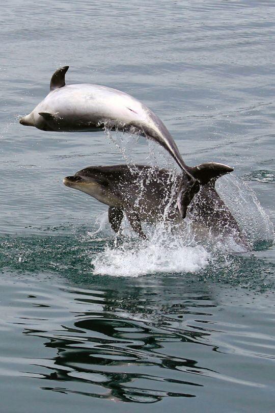 Dreamyst Mit Bildern Unterwasser Tiere Wale Und Delfine