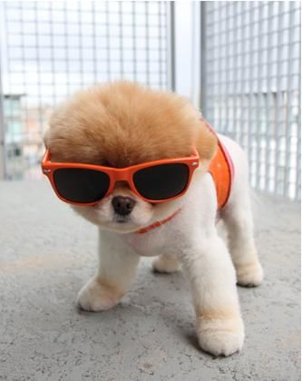 Si vous me trouvez un chien comme ça (qui reste comme ça) je veux bien un animal de compagnie.