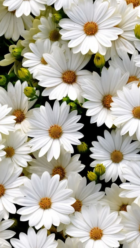 """thelordismylightandmysalvation: """" beauty-rendezvous: """" White Daisies """" """" Love. More"""