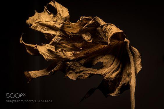 Monstera by ikrasilin