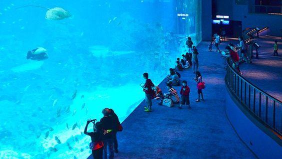 Bên trong Thủy cung S.E.A Aquarium