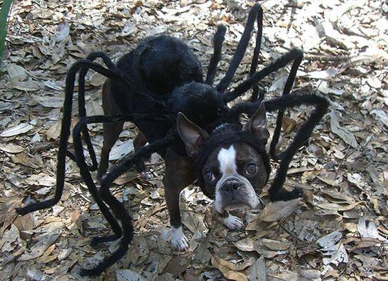 perro-disfraces-internet1