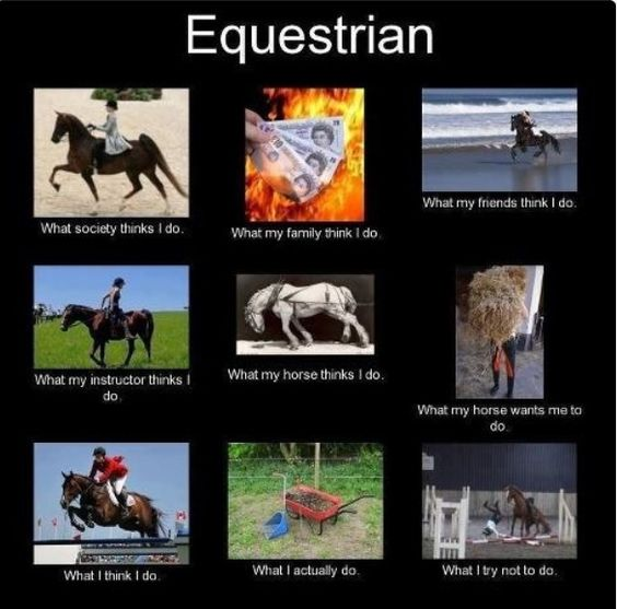 Equestrian... quite accurate. I don't actually own a horse, though, I just go to a barn. It's still pretty darn accurate. :)