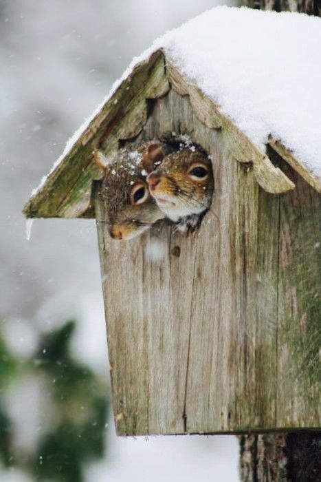 Boxes, Nests and Squirrel on Pinterest