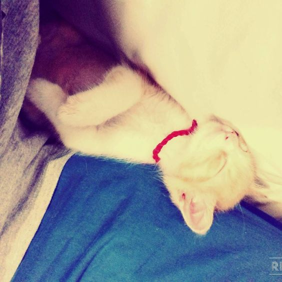 mi pulgoso durmiendo #gatito #kitty #happy #follwme by titin_gatoconbotas