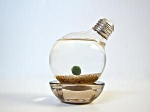 Aqua Terrarium Marimo Moss Ball Light Bulb by eGardenStudio- I have a marimo, there are so low maintenance and the cutest...