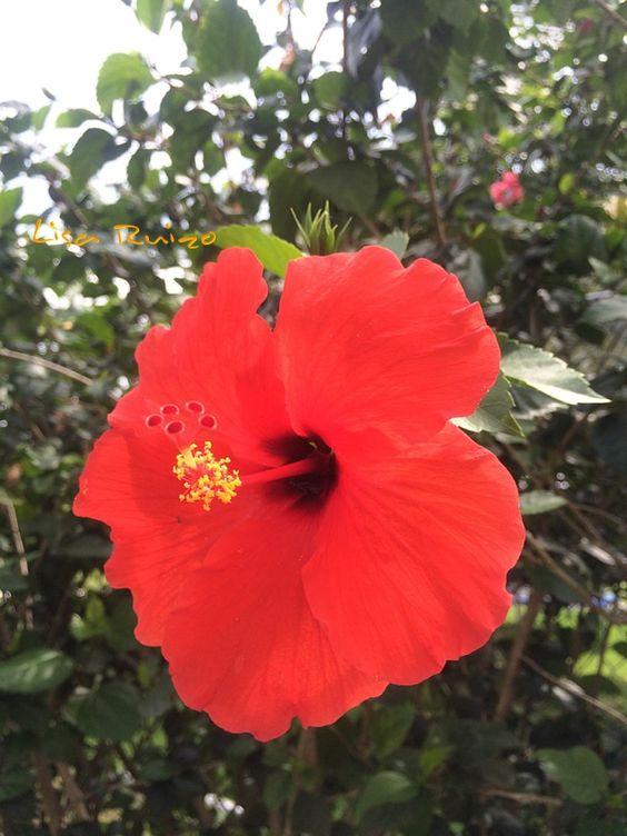 Flor de Papo - Panama 2014